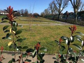 Perimter hedge