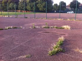 Photo of MUGA end - weeds growing