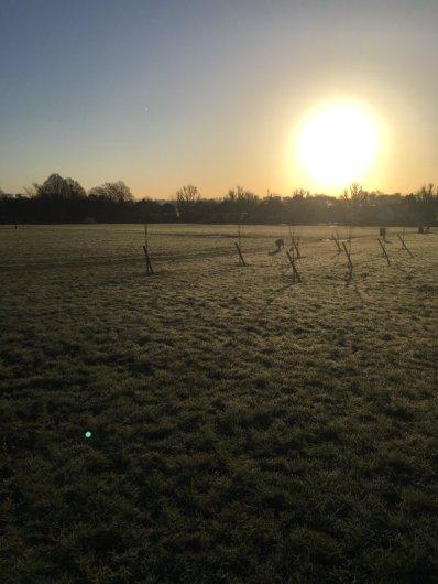 Sunrise Tiveton Green