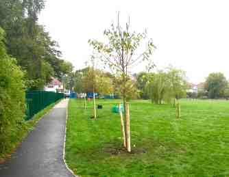 Trees planted at top of Tiverton