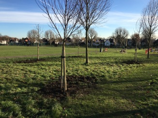 New fruit trees Tiverton Green (West side)